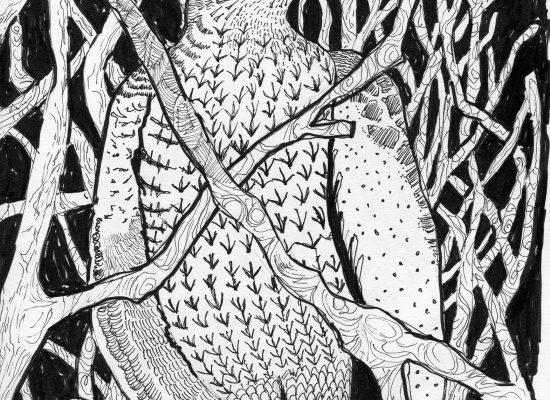 Goshawk in a Nocturnal Woodland